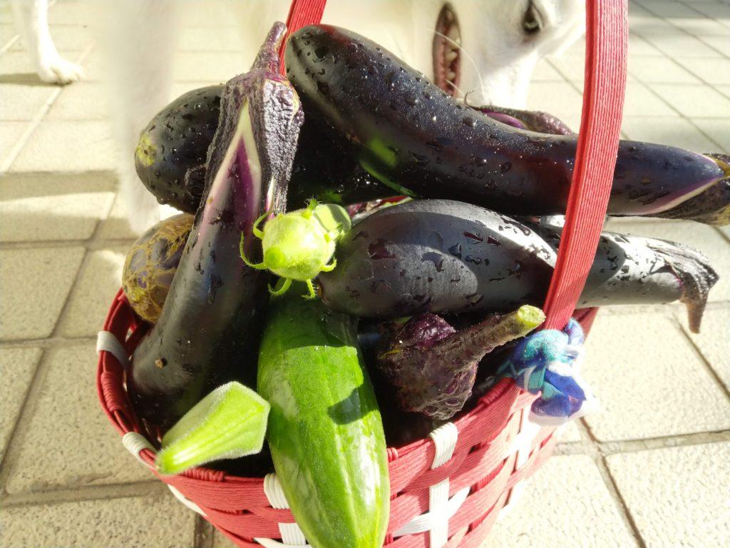 EssentialPhoneのカメラで撮影した野菜
