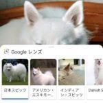 EssentialPhoneでGoogleLensが使えました!