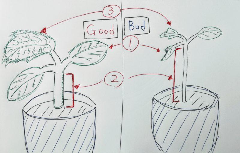 オクラの苗の見分け方
